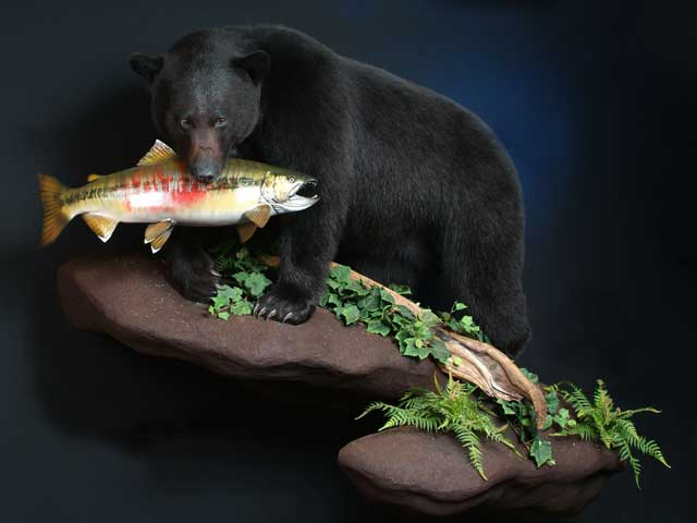 black bear with salmon on wall mount base
