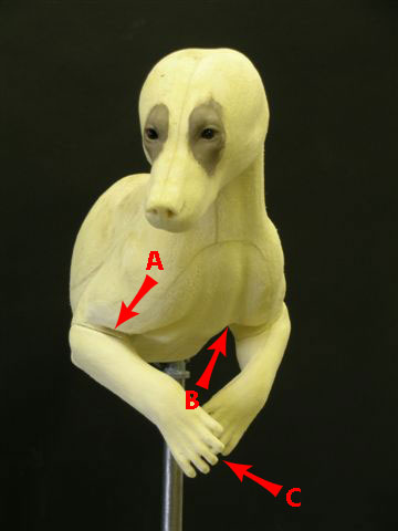 photo of front half bear form preparation tips